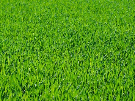 Keeping your grass green with water restrictions