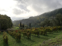 View of the vineyard