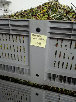 Olives box at the pressing station