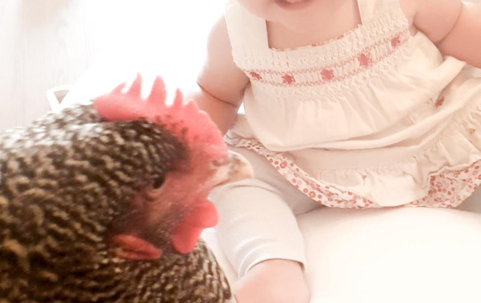 subi chicken.jpg