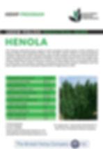 HENOLA JPEG.jpg