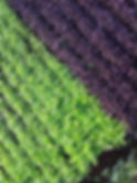 saladimage.jpg