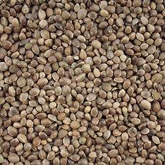 hemp seed 2.jpg
