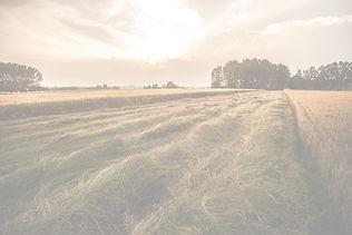 Country%20Field_edited.jpg