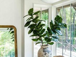 Nuestras plantas de interior favoritas y como usarlas para decorar tu espacio