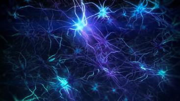 Potiga LD Neuro v.A
