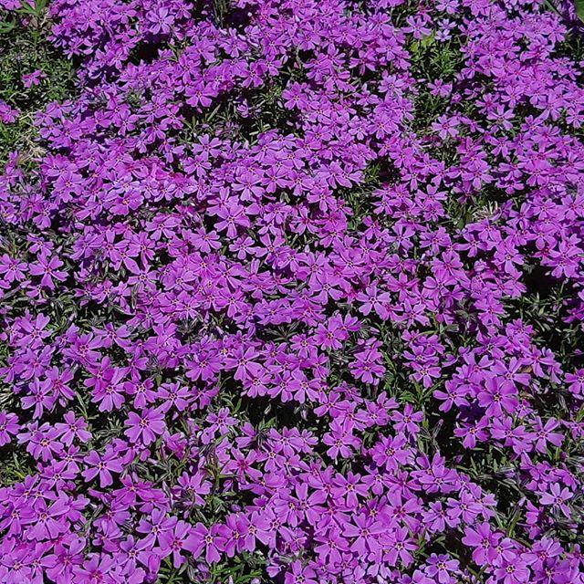 Ковёр цветов #ботаническийсад