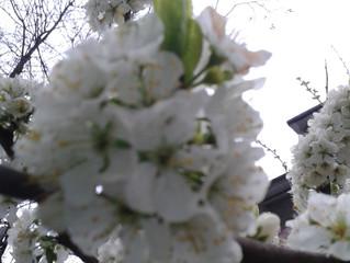Стих про весну