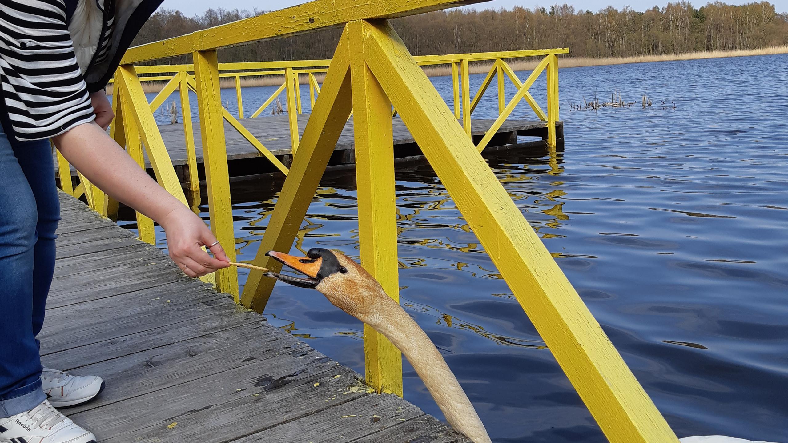 озеро Чайка