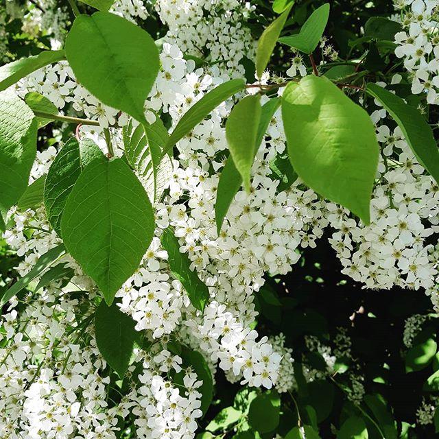Жаль, камера не передаёт аромат #ботаническийсад