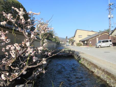 上賀茂神社の社家は土塀の宝庫です。Hey(塀)が好きです。