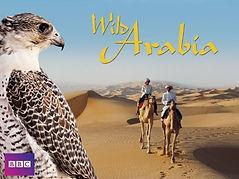 wild arabia.jpg