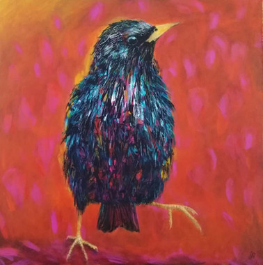 Starling Dance