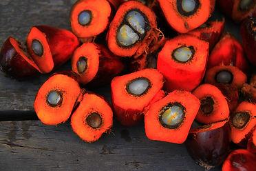 palm-oil-1022012_1920.jpg