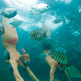 Snorkelling-Underwater-with-Fish-Diving.