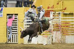 rodeo bucking