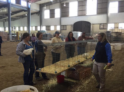 Poultry Competition