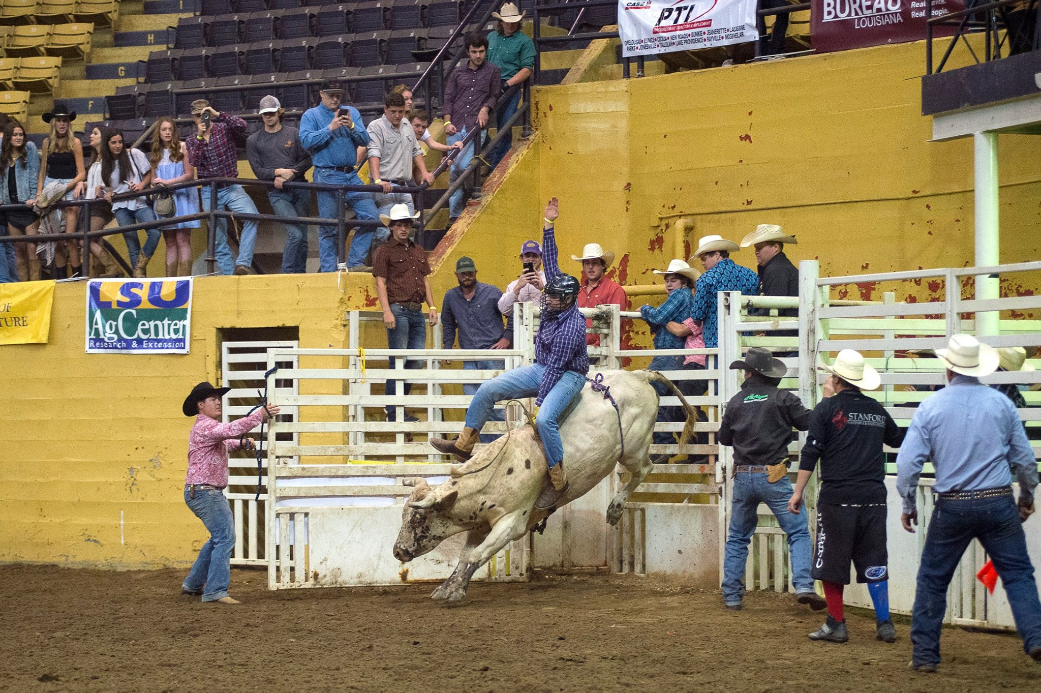 rodeo buckingg good pic