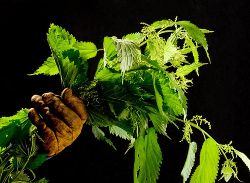 Herbal Forecast for April 2019