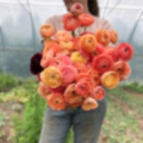 Island Flower Farm, Ranunculus, Flowers, Flower Farm