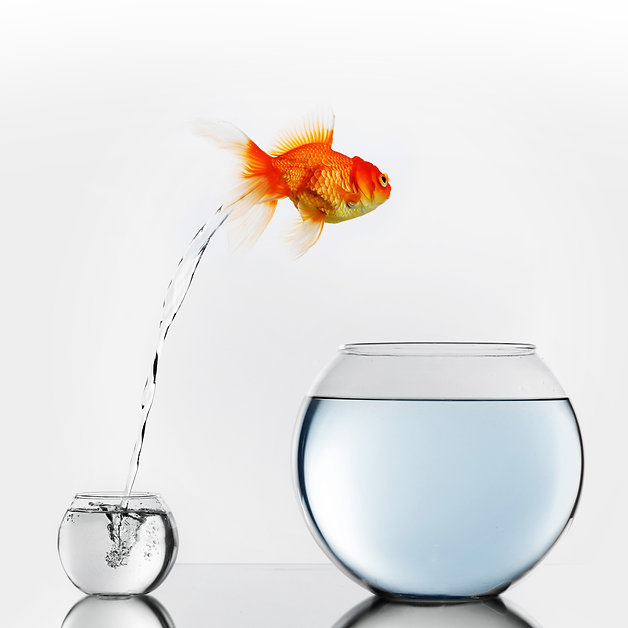 Gold fish jumping out of small to big fi