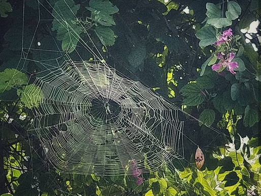 Backyard Wilderness: Spider Webs