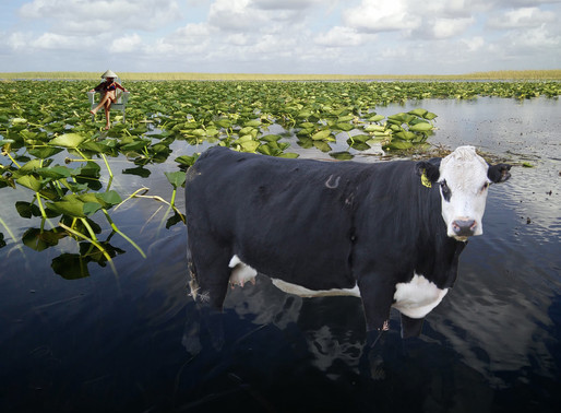 Lost in the Everglades