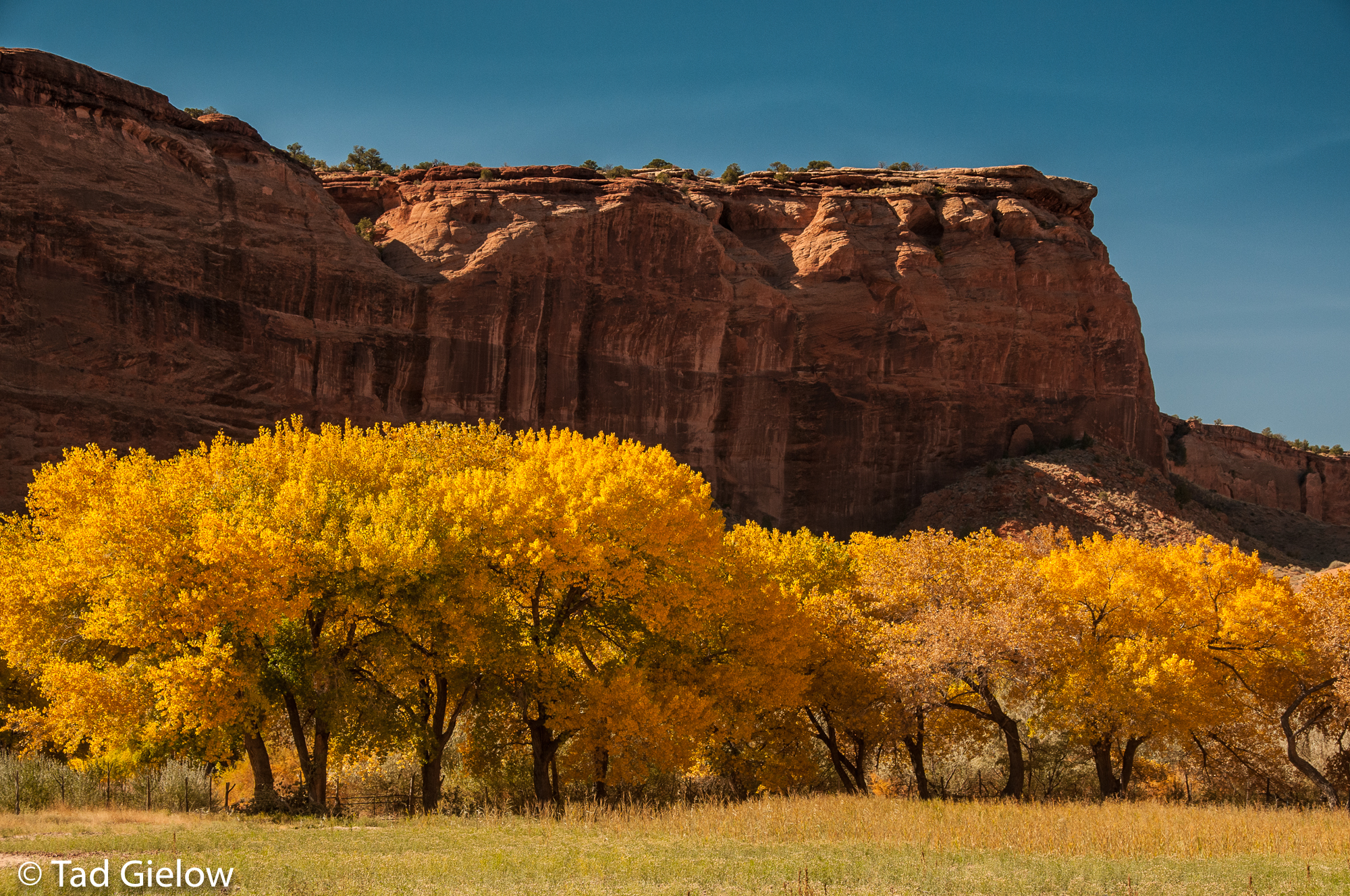 canyon de chelly trips