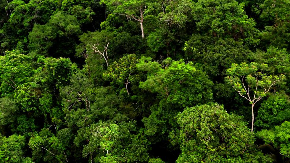 Rainforest - 78317.mp4