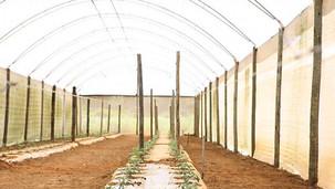 Comissão de Agrotóxicos da Ceagro do CREA-RS encaminha à ALRS parecer favorável ao PL 260/2020