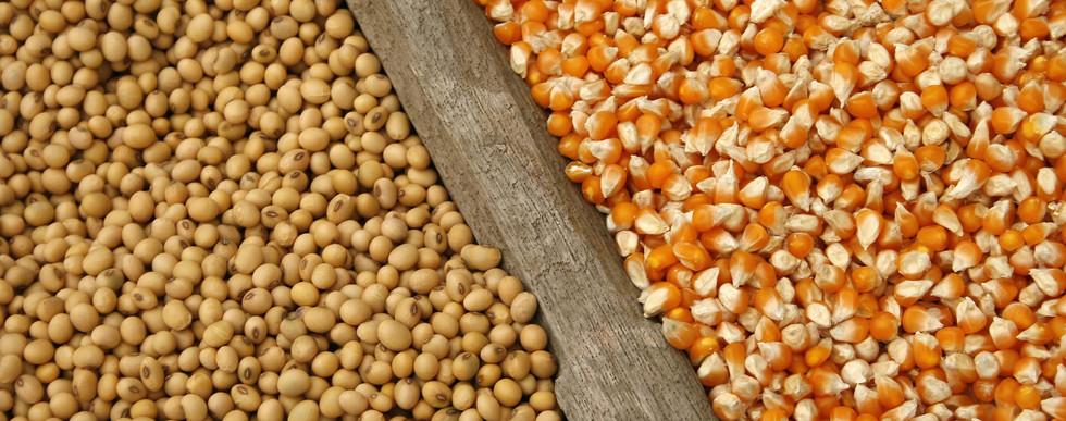 Conab eleva projeção para safra de soja do Brasil 2020/21, reduz para milho