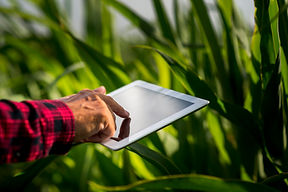close-up-man-using-a-tablet-in-a-field.j