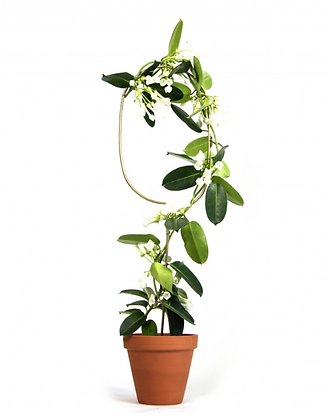 Plant Stake Arch Gold
