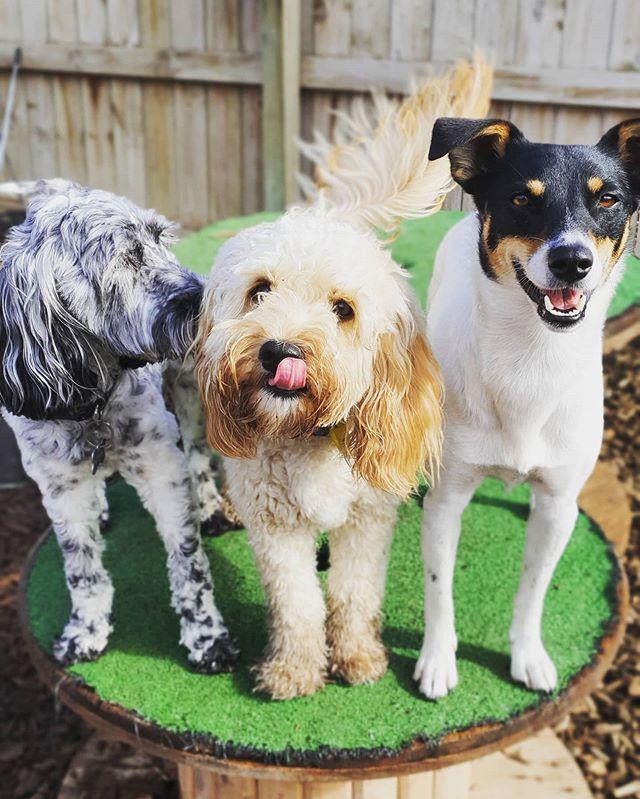 #thehoundshangout #doggydaycare #dogsofi