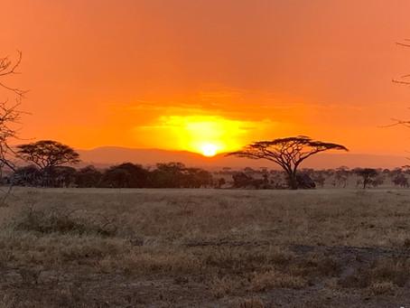 Home of The Lion King - Safari in The Serengeti & Ngorongoro Crater
