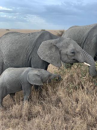 Elephants Together.JPG