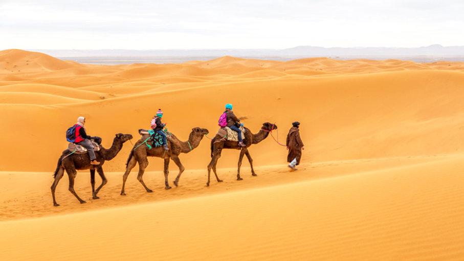 Morocco-camel-sahara-desert-Intrepid-Tra