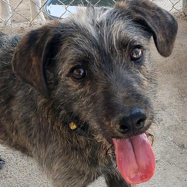 Lenny (Pending Adoption)
