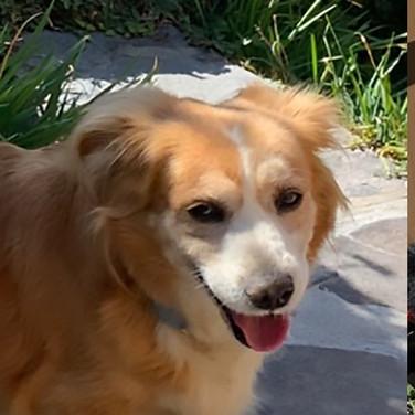 Ella (Pending Adoption)