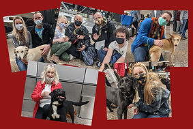 Dogs Adopted at SEATAC 2.jpg