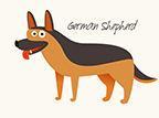 German Sheperd.jpg
