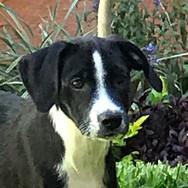 Lorenzo (Pending Adoption)