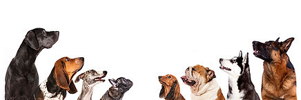 DP Group of Dogs small.jpg