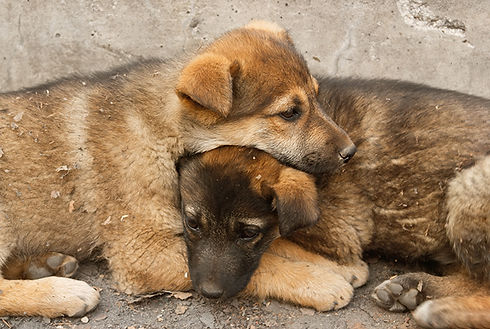 Two Homeless Puppies