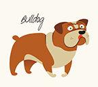 Bull Dog.jpg