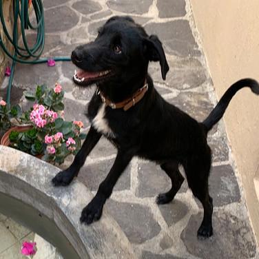 Lance (Pending Adoption)