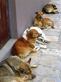 Mexican Street Dogs.jpg