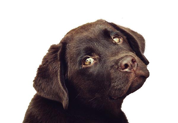 Brown Puppy Sad.jpg