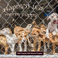 101 Mexican Rescue Puppies!