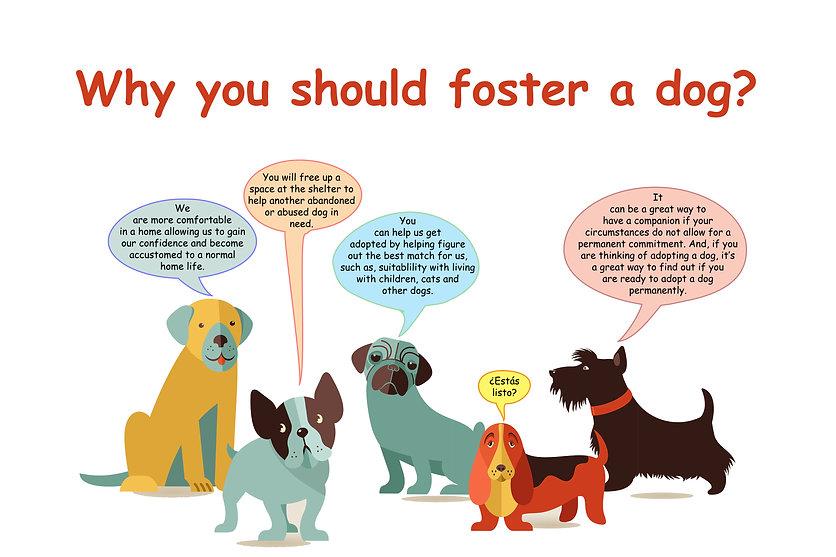 Foster a Dog.jpg